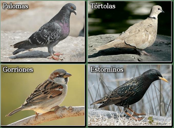 Byostasys, Empresa Control de Aves Madrid