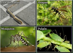 Control de plagas en Madrid de procesionaria, avispas, mosquitos, pulgon