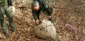 Los agentes forestales intentan acabar con la plaga de avispas
