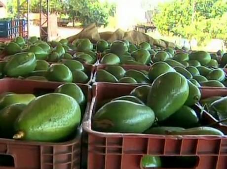 tratamientos fitosanitarios cultivos