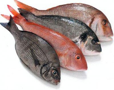 control de plagas en Madrid en pescaderías