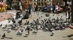 control de aves palomas