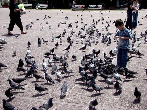 control de palomas Madrid