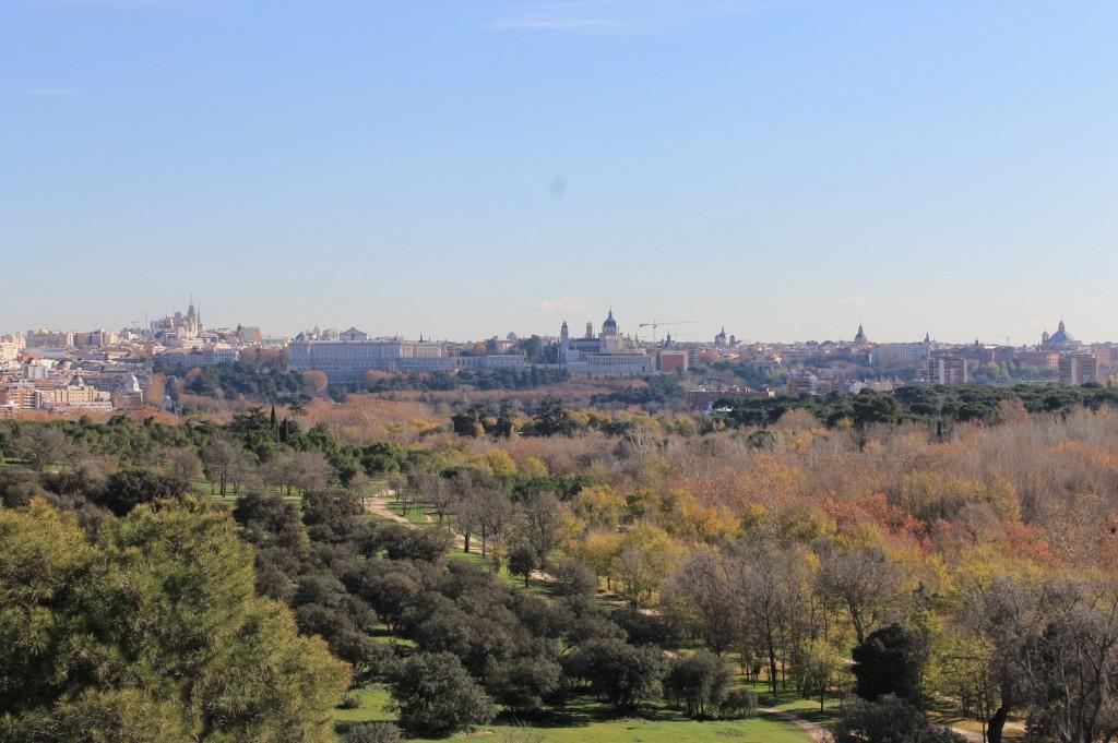 plaga en los olmos de la casa de campo de Madrid