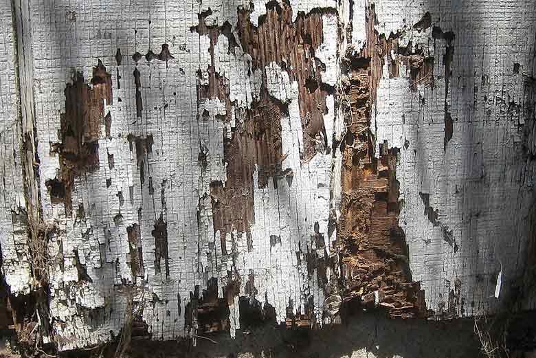 termitas en madrid