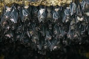 control de plagas con murciélagos