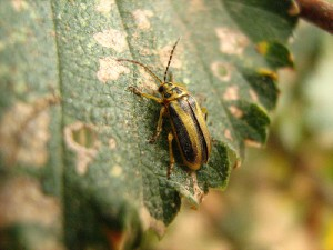Control de plagas fitosanitario