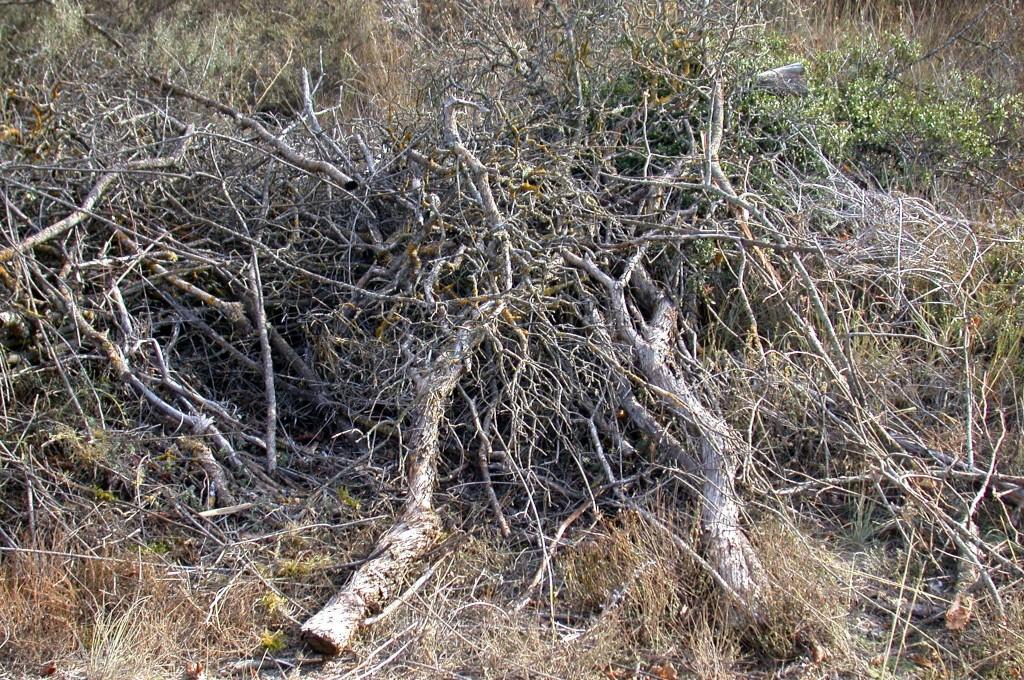 ramas en el suelo