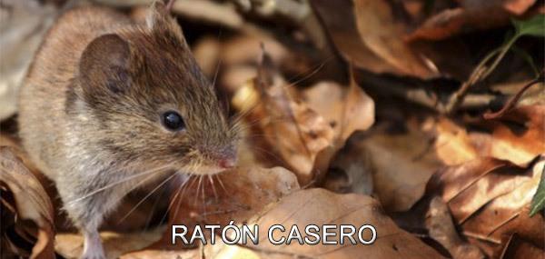 ratoncasero600b