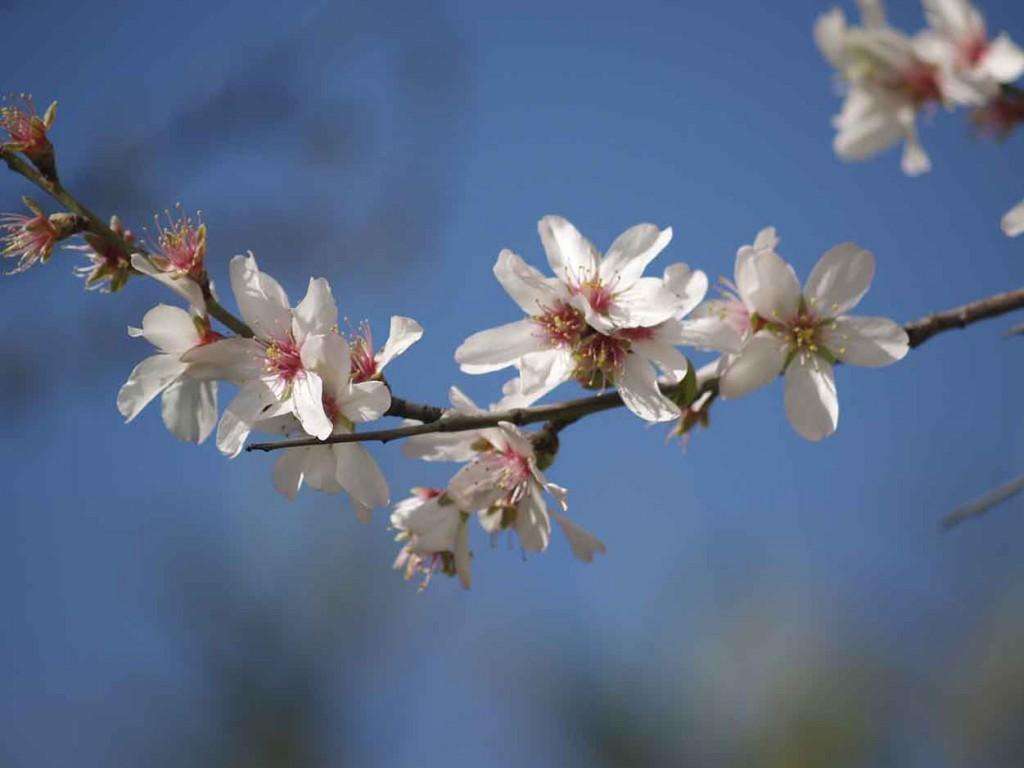 Plagas Primavera