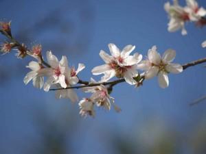 Las plagas de la primavera llegan a Madrid