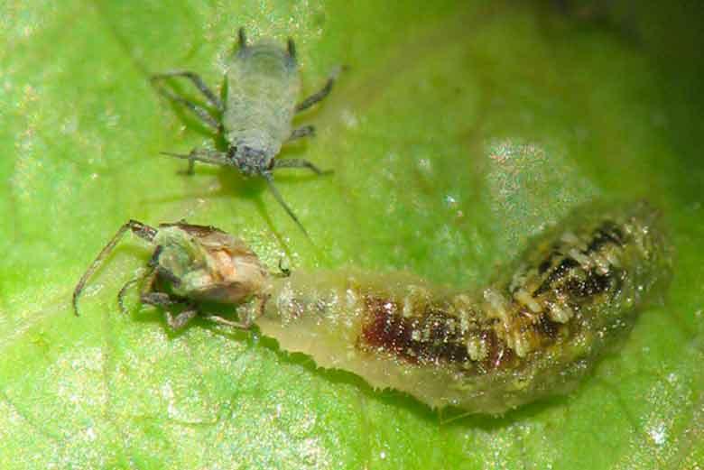 control biológico de plagas en Madrid