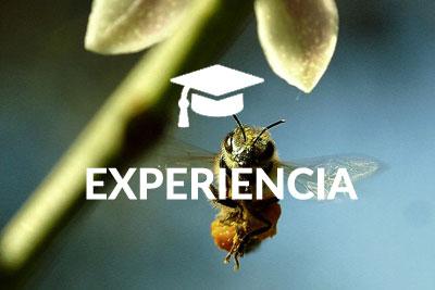 Experiencia Byostasys
