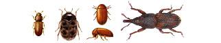 insectos plaga productos almacenados