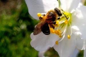 plaga de abejas en madrid