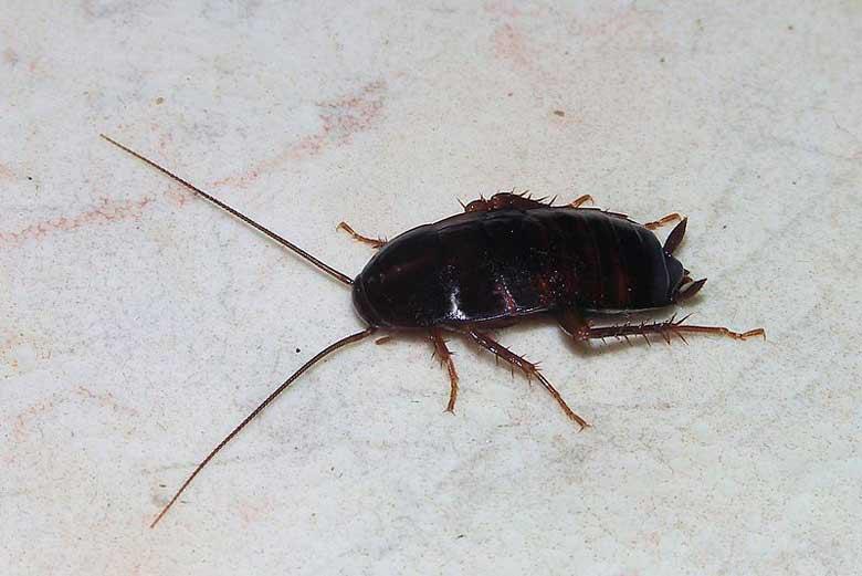 plaga de cucarachas en Madrid