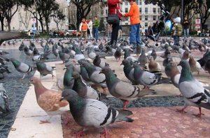 control-de-palomas
