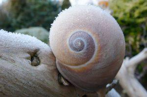 Plagas de Invierno