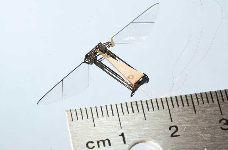 insectos robóticos