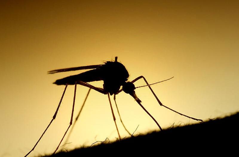 eliminar-mosquitos