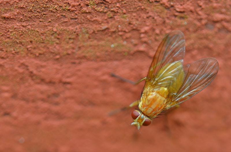picaduras-de-mosquitos