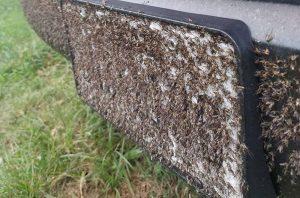 plagas de mosquitos