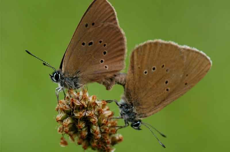 la extinción de los insectos