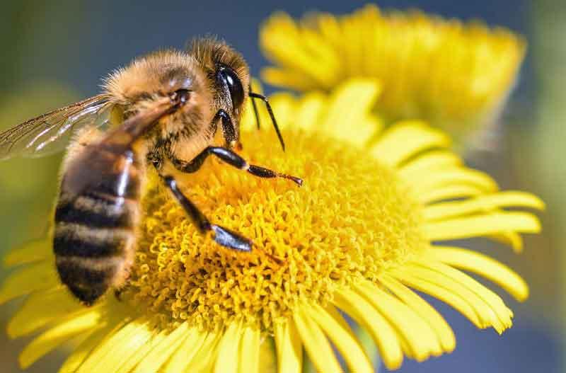 insectos-polinizadores
