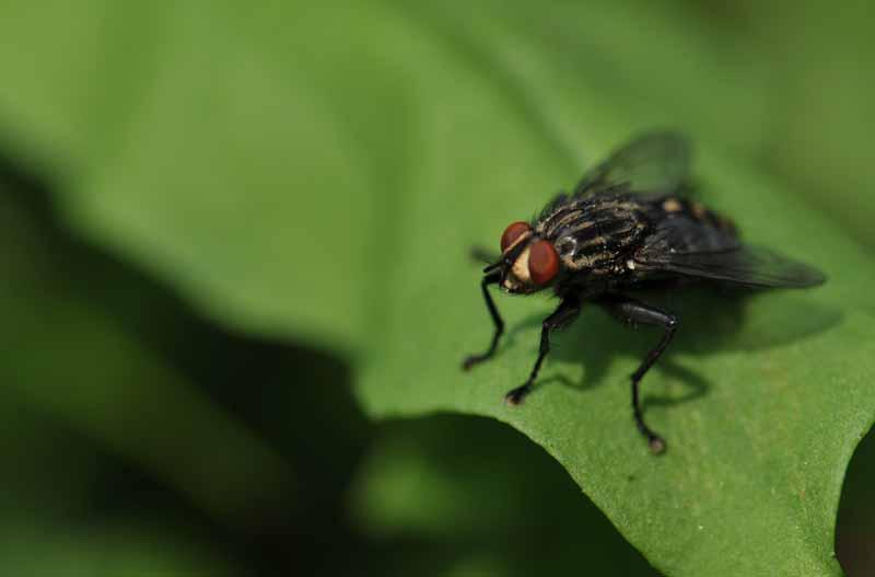 plagas-de-mosquitos