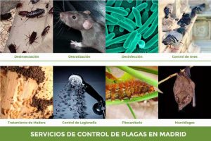 control-de-plagas-madrid
