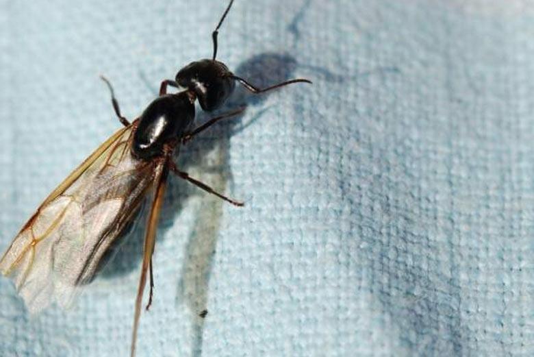 eliminar insectos