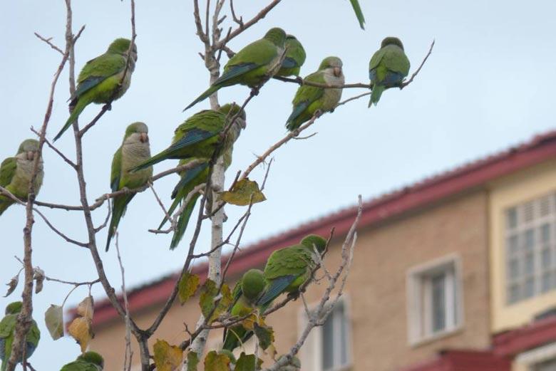 Control de aves en Madrid