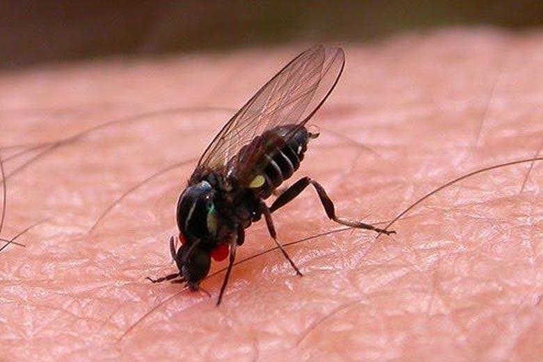 control de mosquitos en Madrid