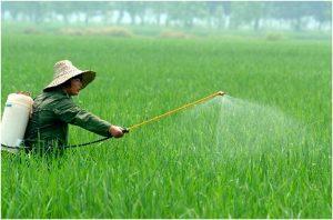 Plaguicidas para eliminar insectos