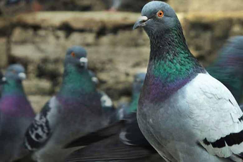 el control de aves