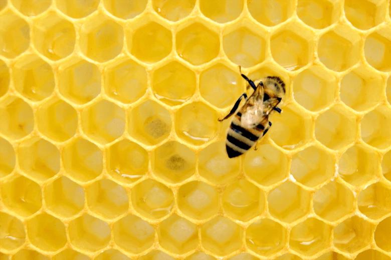 extinción masiva de insectos