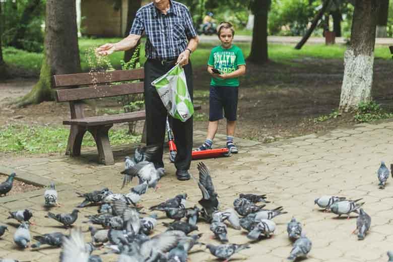 ontrol de palomas urbanas