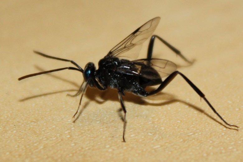 una plaga de cucarachas