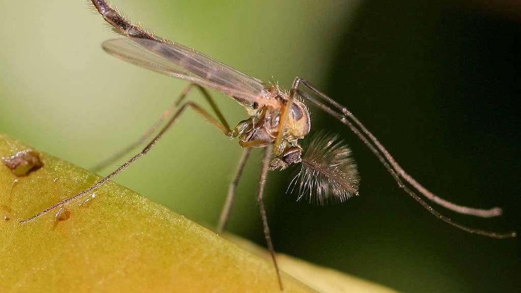 Control de plagas de mosquitos y moscas